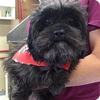 Adopt A Pet :: Cooper - Abbeville, LA