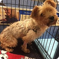 Adopt A Pet :: Keri - Gainesville, FL