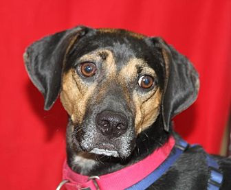 Hound (Unknown Type) Mix Dog for adoption in Wayne, New Jersey - Duke