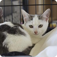 Adopt A Pet :: .Elora - Ellicott City, MD