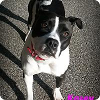 Adopt A Pet :: Kasey - Muskegon, MI