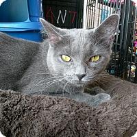 Adopt A Pet :: Pilkie - Columbus, OH
