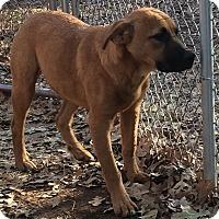Adopt A Pet :: Arianna - Blanchard, OK