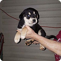 Adopt A Pet :: Malcolm - pending - Manchester, NH