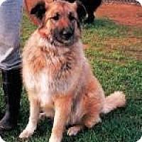 Adopt A Pet :: Annabelle - Orange Cove, CA