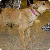 Adopt A Pet :: 3 young adult dogs - Lucerne Valley, CA