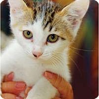 Adopt A Pet :: Jean Harlow - Scottsdale, AZ