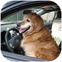 Adopt A Pet :: Taylor - Denver, CO