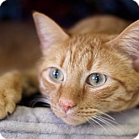 Adopt A Pet :: Frijoles - Chicago, IL