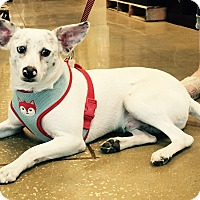 Adopt A Pet :: Chorder#3M - Orlando, FL