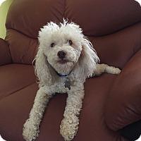 Adopt A Pet :: Jojo - San Francisco, CA