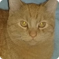 Adopt A Pet :: Butterscotch - Delmont, PA