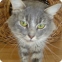 Adopt A Pet :: Adele - Hamburg, NY