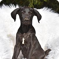 Adopt A Pet :: Jasper - Charlemont, MA