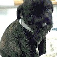 Adopt A Pet :: Houston-ADOPTION PENDING - Boulder, CO