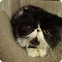 Adopt A Pet :: Miss Panda - Columbus, OH