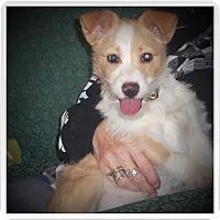 Adopt A Pet :: FIONA - Medford, WI