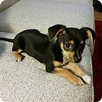 Adopt A Pet :: Lucy - Brea, CA