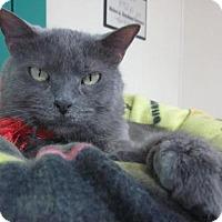 Adopt A Pet :: Jade - Lakewood, CO