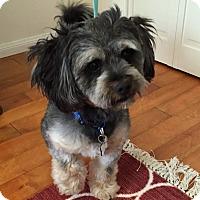 Adopt A Pet :: Edsel - Redondo Beach, CA