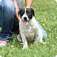 Adopt A Pet :: Jake - Groton, MA