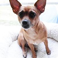 Adopt A Pet :: Reny - Umatilla, FL