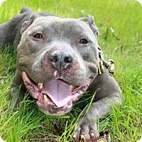 Adopt A Pet :: Charlie - Snellville, GA
