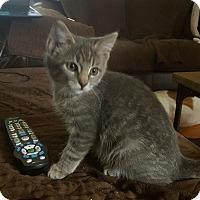 Adopt A Pet :: Sina - Berkeley Hts, NJ