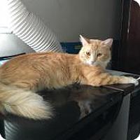 Adopt A Pet :: Sophie - Mission Viejo, CA
