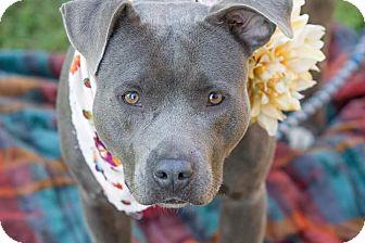 Terrier (Unknown Type, Medium) Mix Dog for adoption in Flint, Michigan - Connie