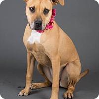 Adopt A Pet :: Molly - Irving, TX