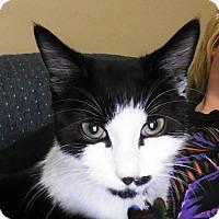 Adopt A Pet :: Oreo - Middlebury, CT