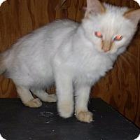 Adopt A Pet :: Bonnie - Palm Springs, CA
