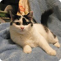 Adopt A Pet :: Peace - North Wilkesboro, NC