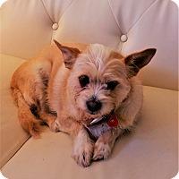 Adopt A Pet :: Sugar - Brasstown, NC
