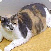 Adopt A Pet :: Kitty - Wildomar, CA