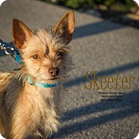 Adopt A Pet :: Skeeter - Scottsdale, AZ