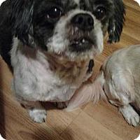 Adopt A Pet :: Bella - Codorus, PA