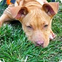 Adopt A Pet :: Valentina - Pompano Beach, FL