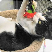 Adopt A Pet :: Tally - Warminster, PA