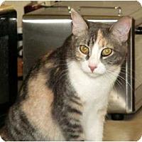 Adopt A Pet :: Smart, very active Tempe - Scottsdale, AZ