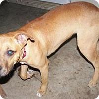 Adopt A Pet :: Spice - Hilham, TN