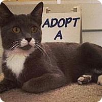 Adopt A Pet :: Melvin - Chandler, AZ