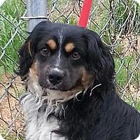 Adopt A Pet :: Hudson - Brattleboro, VT