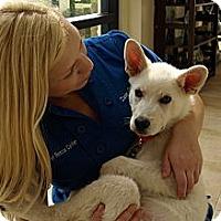 Adopt A Pet :: Goose - Mission Viejo, CA
