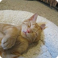 Adopt A Pet :: Simba - Richland, MI
