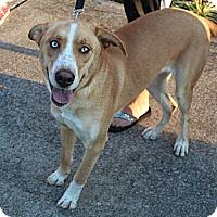 Adopt A Pet :: Nakita - Smyrna, TN