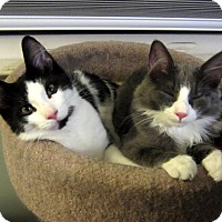 Adopt A Pet :: Gilligan & Garth-Brothers - Arlington, VA