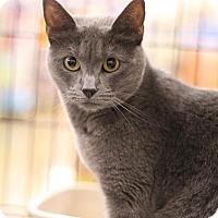 Adopt A Pet :: Mila - Sacramento, CA