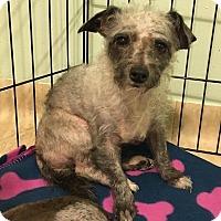 Adopt A Pet :: Bernadette - Troy, MI